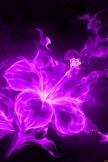 Flower-Effekt