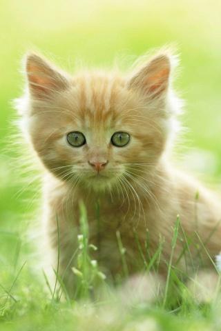 Süße Kätzchen iPhone Wallpaper