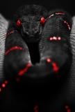 致命的なヘビ