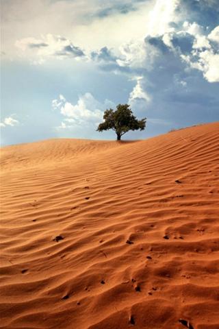 Wüste-Baum iPhone Wallpaper