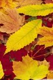 色を葉します。