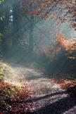 Wald sonnigen Weg