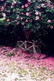 椿とバイク