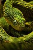 気味悪いヘビ