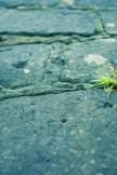 Gras und Steine