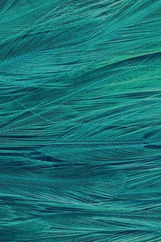 羽の青い鳥のパターン iPhoneの壁紙