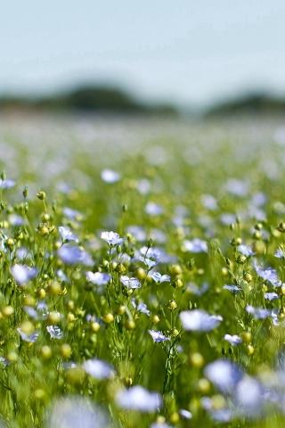 フィールド グリーン コスモス花春の自然 iPhoneの壁紙