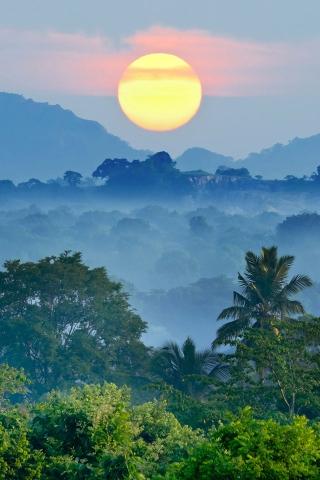 ジャングルの夕日 iPhoneの壁紙