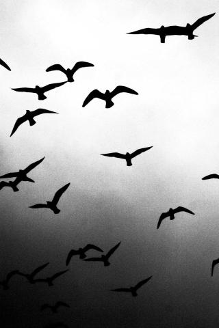 Flying Birds iPhone Wallpaper