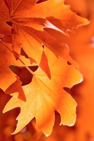 秋のマクロ iPhoneの壁紙