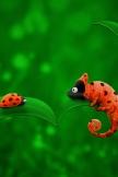Ladybug and Chameleon