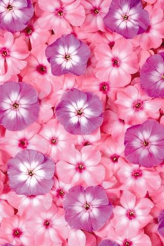 花のパターン iPhoneの壁紙