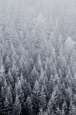 winter kiefern iPhone Wallpaper