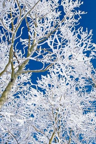 雪の枝 iPhoneの壁紙